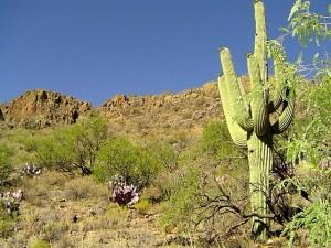 Desert, Tucson