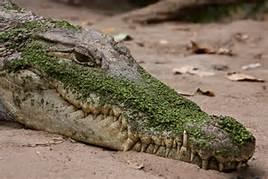 happy-croc