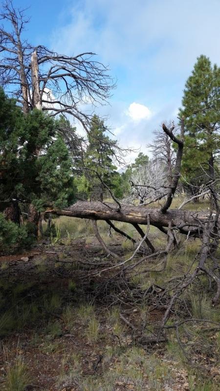 tree-fall-down