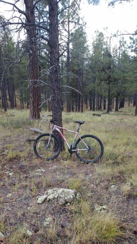 wildernesspunk-88888