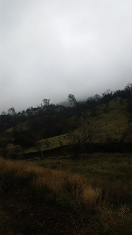 california mists