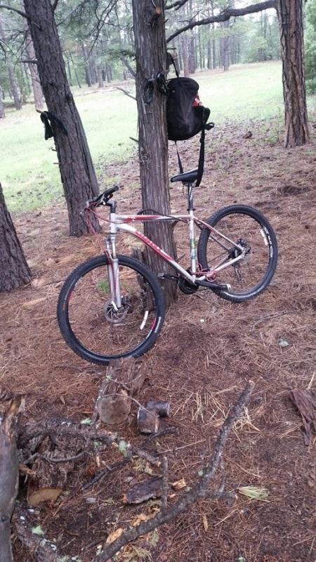 bike lilly